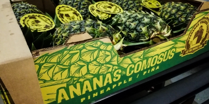 ananas cosmus band